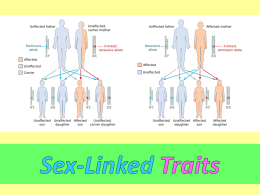 Sex Linked Traits PPT