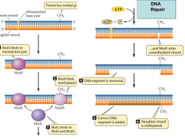 in prokaryotes RNA polymerases require a sigma factor to bind DNA
