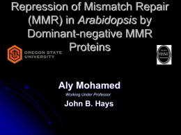 Repression of Mismatch Repair Arabidopsis Dominant-negative MMR Proteins