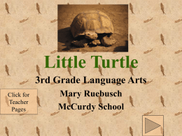 Little Turtle: Summary