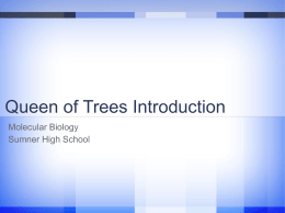 8.4 Queen of Trees Assignment queen_of_trees_intro_s12