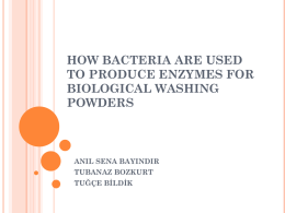 how bacteria are used to produce enzymes for