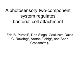 A photosensory two-component system regulates