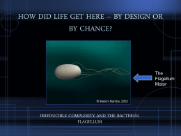HOW DID LIFE GET HERE – BY DESIGN OR BY CHANCE?
