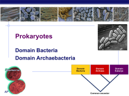 Prokaryotes - Biology Junction