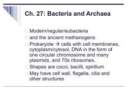 Ch. 27: Bacteria and Archaea