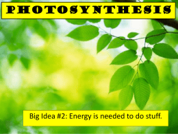 Photosynthesis - Downtown Magnets High School