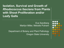 Isolation, Survival and Growth of Rhodococcus facians from plants