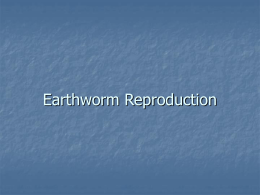 Earthworm Reproduction