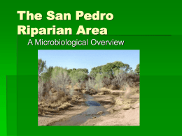 The San Pedro Riparian Area