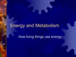 Energy and Metabolismx