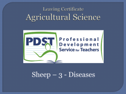 Sheep disease