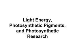 SBI4U1_02_06_Light Energy_Pigments_Research