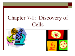 Chapter 7-1: Discovery of Cells
