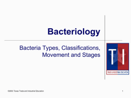 Chp.5 Types of Bacteria