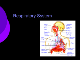Respiratory System - BartlettsBiology11C