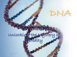 DNA_and_Replication