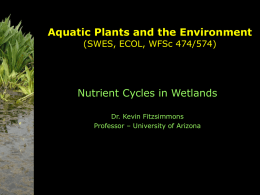 Wetland Ecosystem Management - Nutrient