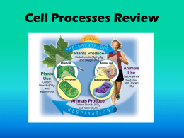 to view the slides on Cell Processes
