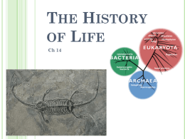 The History of Life