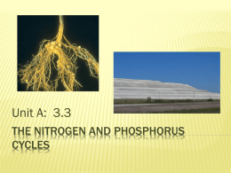 The Nitrogen and phosphorus cycles