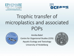 Trophic transfer of microplastics and associated POPs