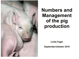 Management of the pig production Linda Fager