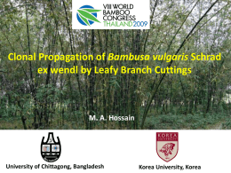 Hossain, M.A. - World Bamboo Organization