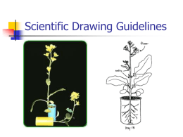 Scientific Drawing Guidelines
