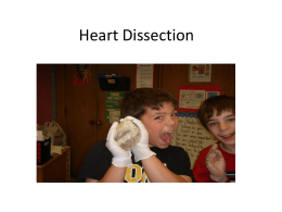 Heart dissection - School
