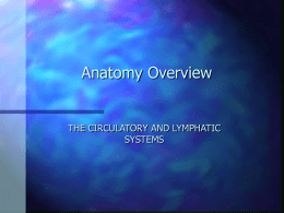 OVERVIEW: THE CIRCULATORY AND LYMPHATIC SYSTEMS