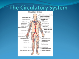 The Circulatory System - Algonquin and Lakeshore Catholic