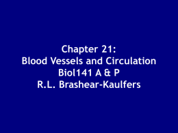 Chapter 21: Blood Vessels and Circulation
