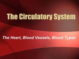 35. Arterial system. Systemic circulation