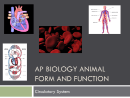 AP Biology Animal Form and Function Circulatory ppt.