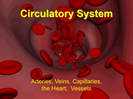 Circulatory System_Teacher