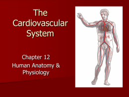 I. Overview of the Cardiovascular System