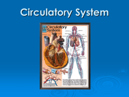 Chapter 6 Circulatory System