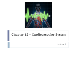 Chapter 12 * Cardiovascular System