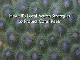 Hawaii's Local Action Strategies to Protect Coral Reefs