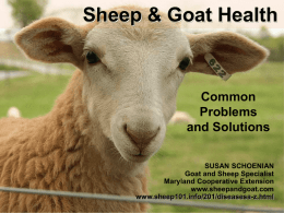 Sheep & Goat Health Common Problems and Solutions