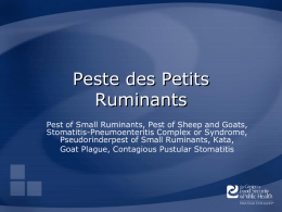 Peste des Petits Ruminants - The Center for Food Security and