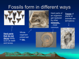 Origins of Life & Fossil Evidence B2 6.1 & 6.2
