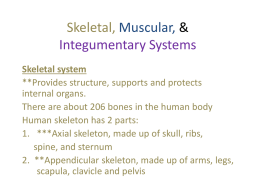 Skeletal, Muscular, & Integumentary Systems