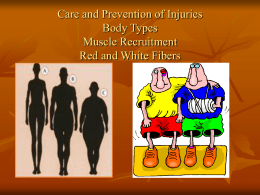Care and Prevention of Injuries Body Types Muscle Recruitment