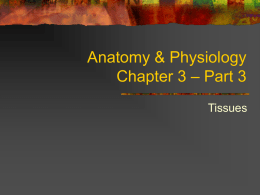 Anatomy & Physiology Chapter 3 – Part 3
