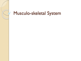 Musculo-skeletal system - Teachnet UK-home