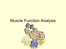 Muscle Function Analysis