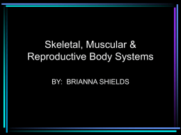Body System Show 3