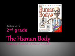 2nd grade The Human Body